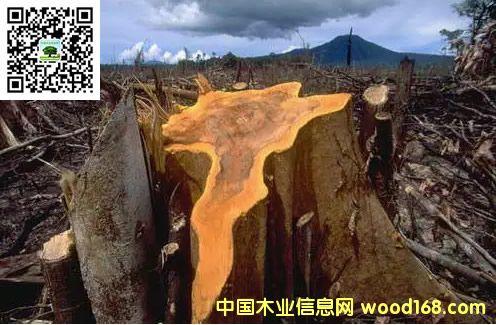 外媒称东南亚进入掠夺时代:珍稀红木非法贸易猖獗