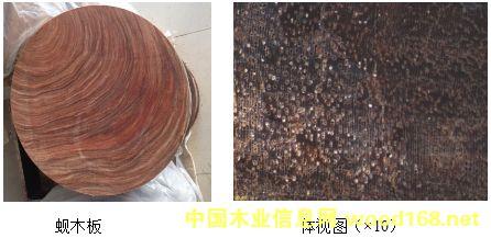 广西四大名贵硬木:金丝李、蚬木、格木、铁力木