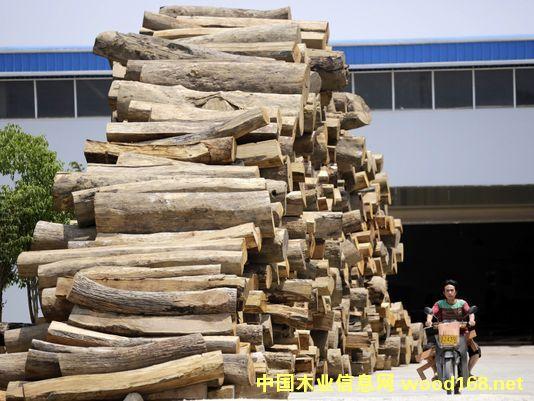 云南瑞丽的一家家具厂门前堆满了木材