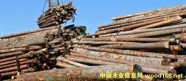 莫桑比克等非洲5国一致同意共同打击非法木材贸易