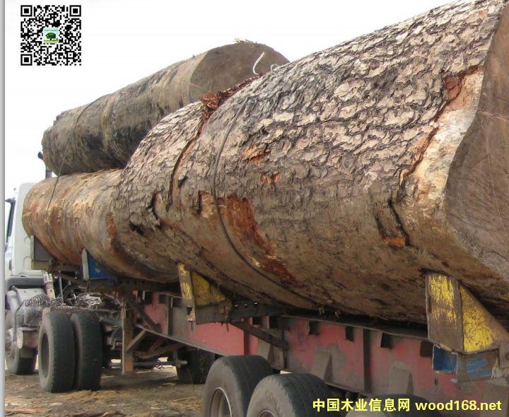 中国成为世界最大的刚果盆地木材进口国