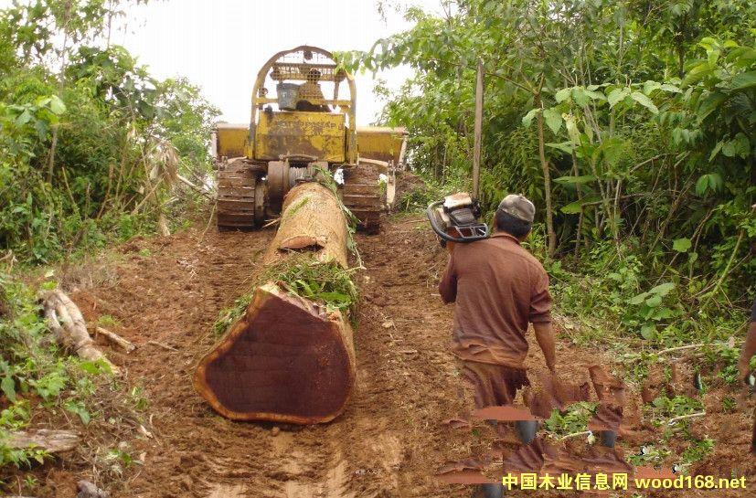 越南木材产业转型升级,进出口手续有哪些?