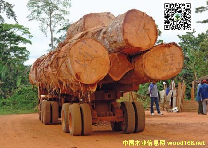 中国是非洲木材最大的出口市场