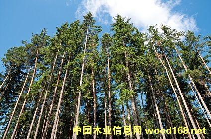 PEFC认证对芬兰林业影响深远