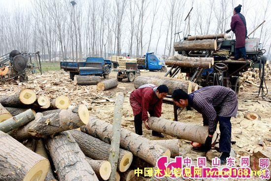 茌平县菜屯镇发展农户木材加工让农民无闲冬
