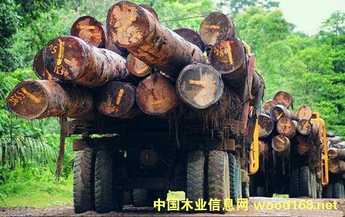 马来西亚木材业出口200亿 需求量增加