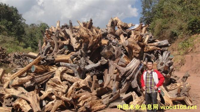 老挝木材-大红酸枝