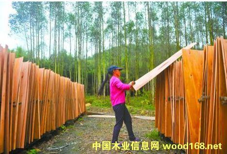 桉树木材价格大幅下跌
