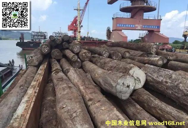 中山神湾鱼珠木材港迎来4000方木材成功登陆