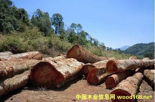 老挝木材资源丰富
