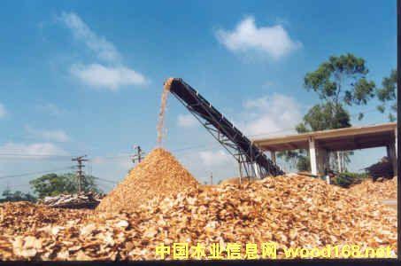 七坡林场桉木片、松杂木片