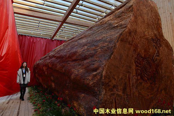 世界最大木材几内亚玫瑰树 直径3.2米重62吨