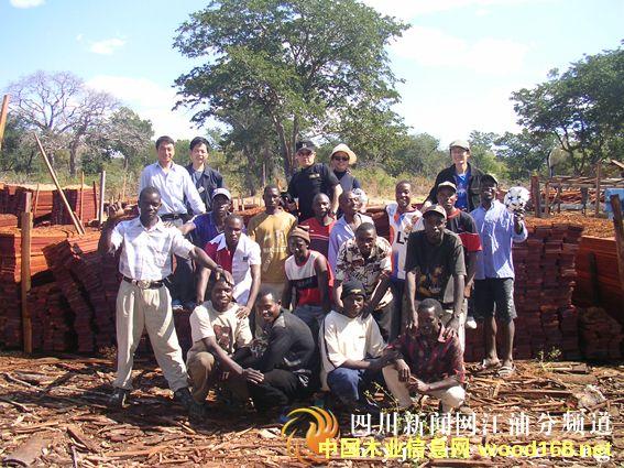 赞比亚木材