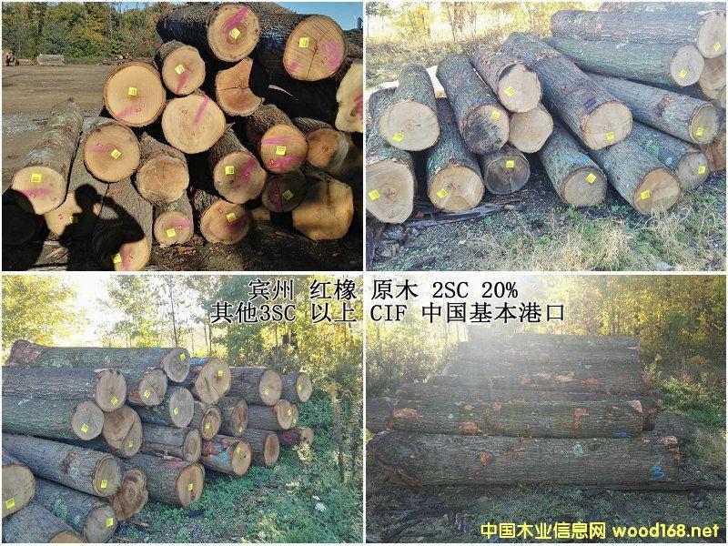 红橡刨切、锯切原木