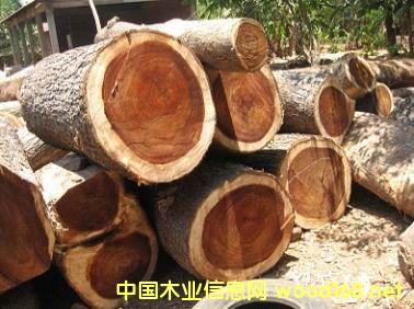 老挝大果紫檀进口报关代理