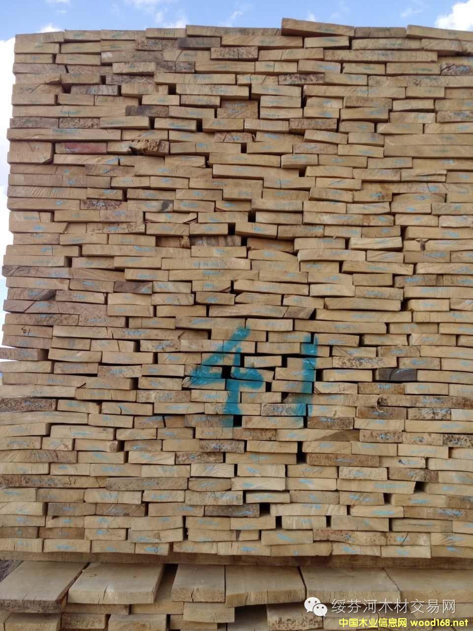 俄罗斯托木斯克桦木干燥锯材
