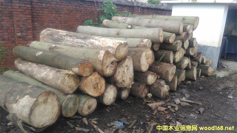 泡桐木原木和锯材