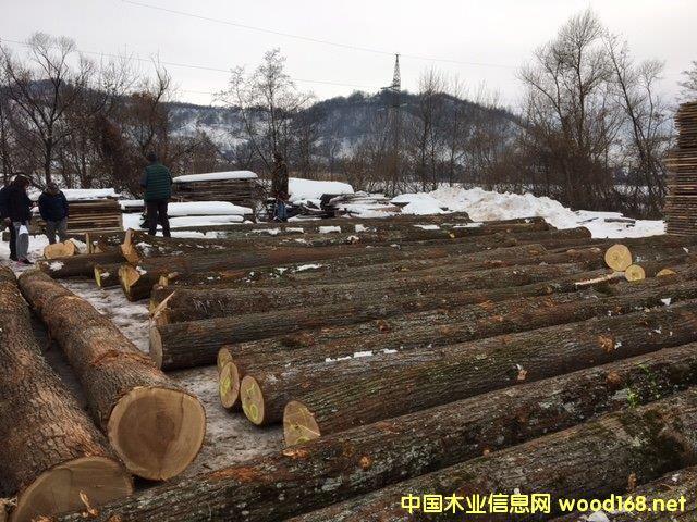 欧洲椴木原木
