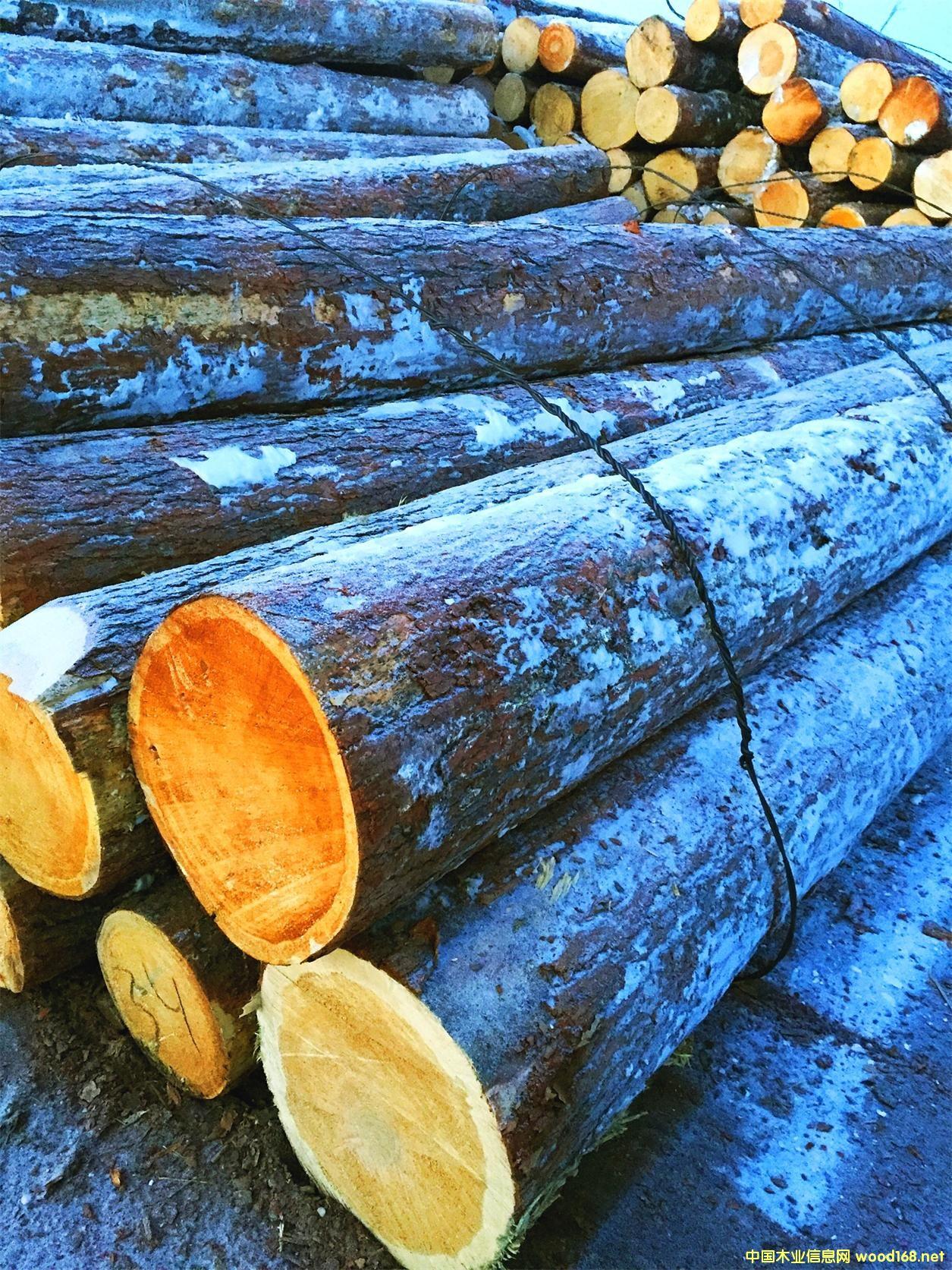 红松 原木6米Φ45