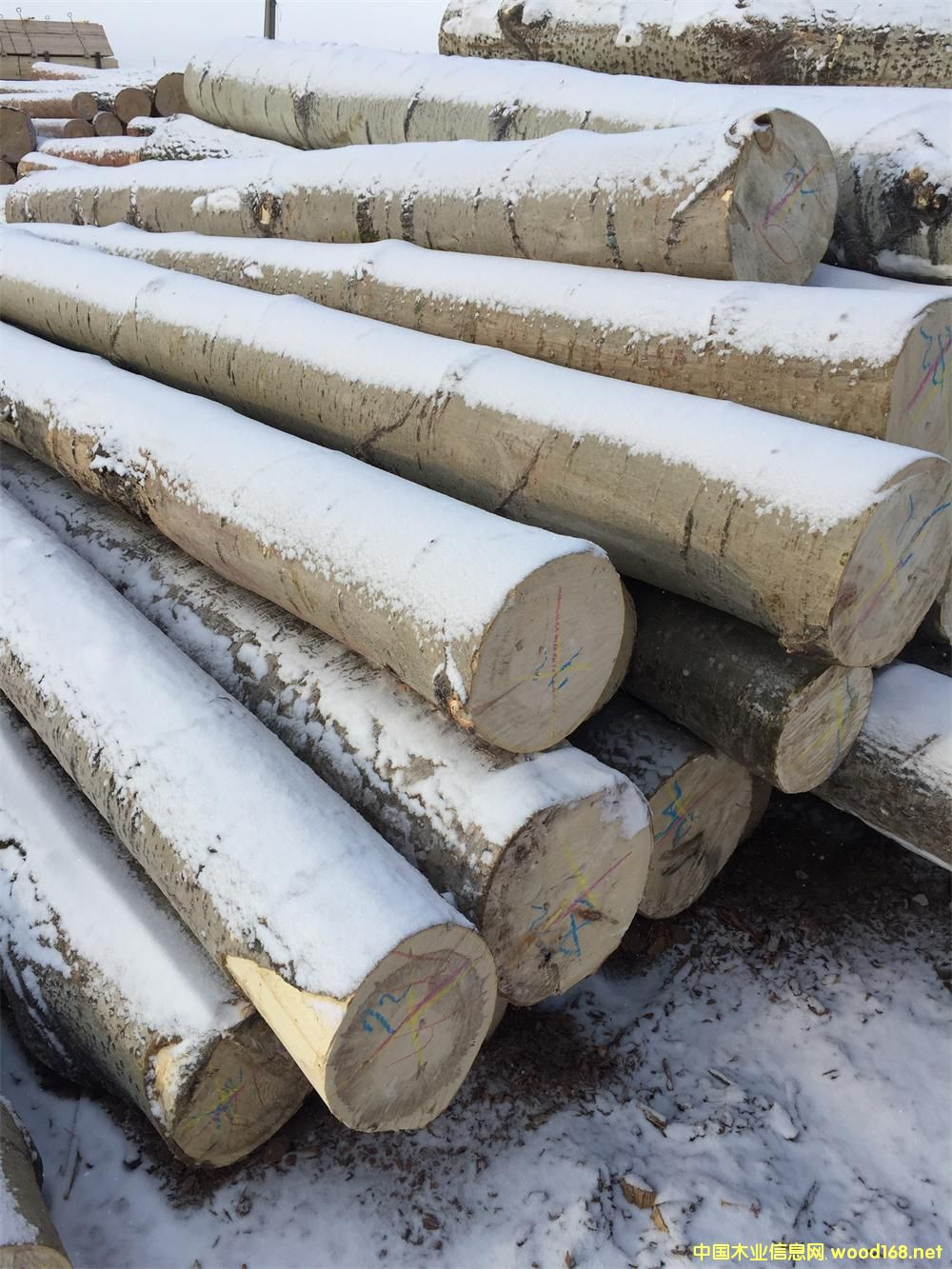 杨木4米6米原木的详细介绍