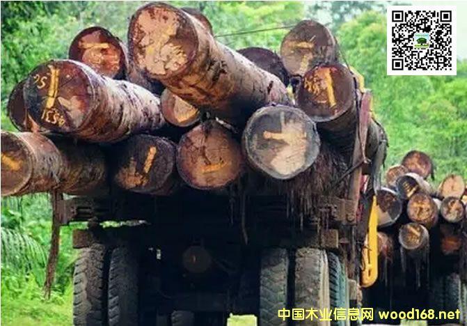 柬埔寨即日起断绝所有与越南间走私红木通道