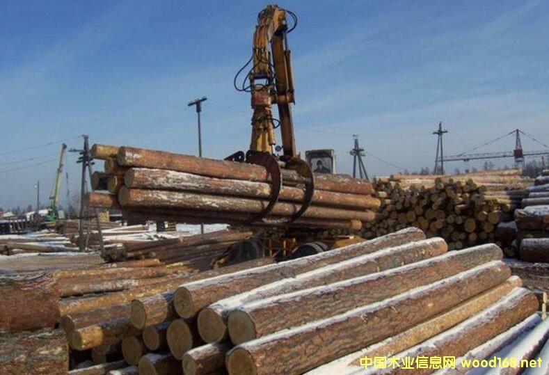 满洲里、二连浩特、绥芬河口岸樟子松原木价格高企