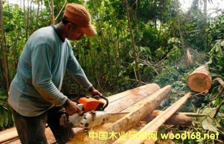 印尼颁发845份FLEGT认证 向欧盟出口木制品活跃