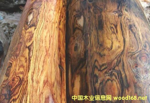 <云南>紫油木(云南清香木、虎斑檀)