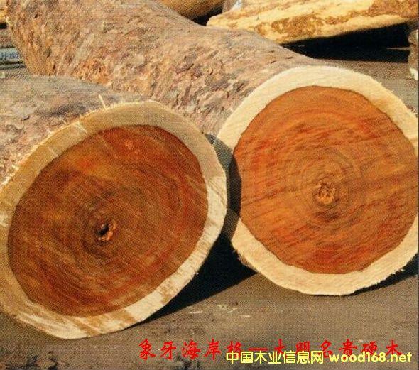 木材树种详解--象牙海岸格木