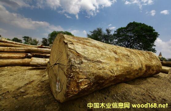 缅甸木材集散地曼德勒