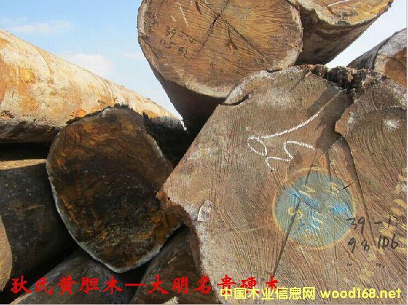 木材树种详解--狄氏黄胆木  俗称: 巴蒂木、加纳乌檀