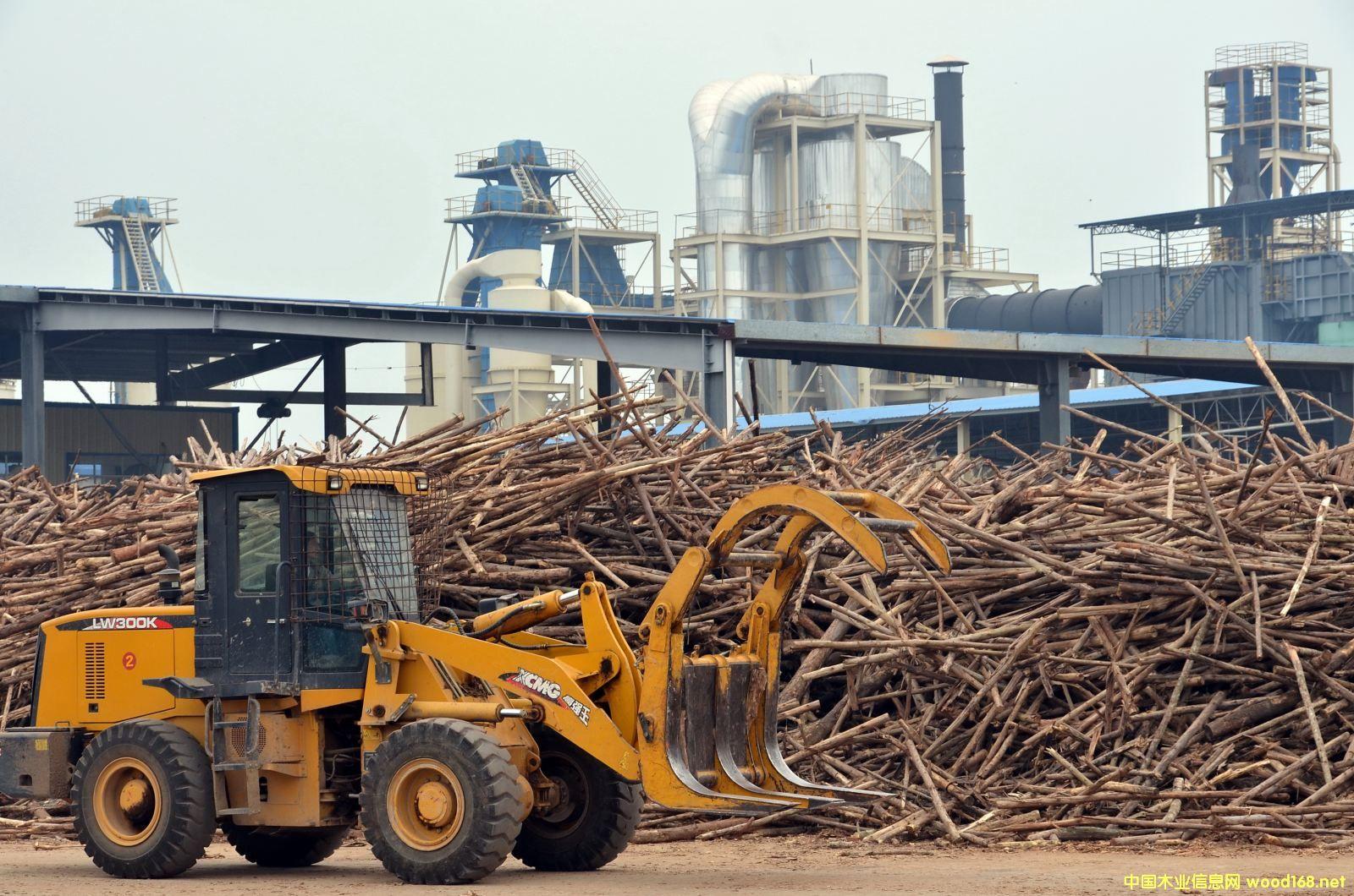 中国与东盟林业合作提速 贸易额已达318亿美元