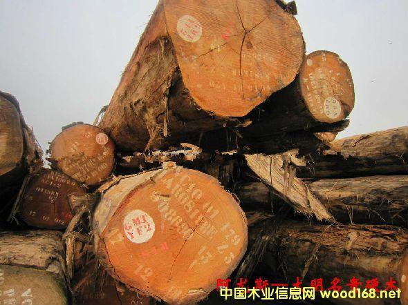 木材树种详解--阿尤斯  俗称:白梧桐、非洲白木