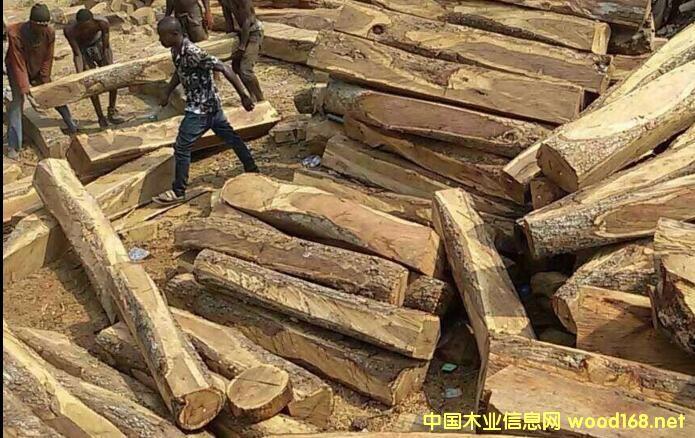 红木原材数量锐减价格疯涨 家具企业如何应对?
