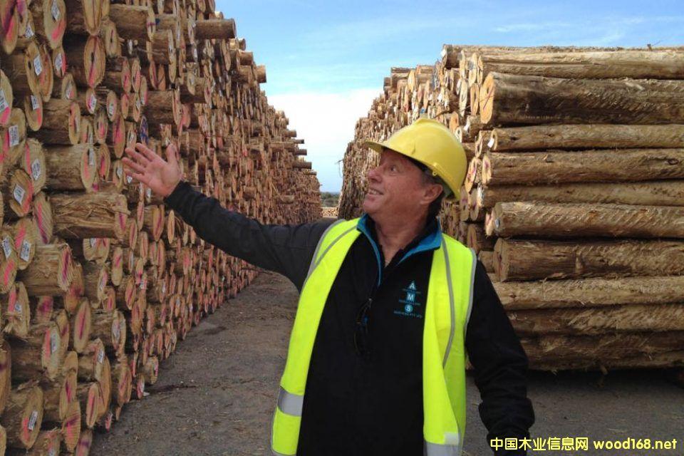 """澳大利亚塔州木材在中国找到""""新大陆"""""""