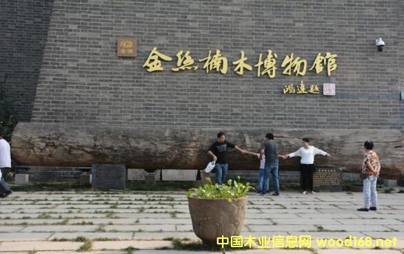 18吨金丝楠原木现身山东聊城