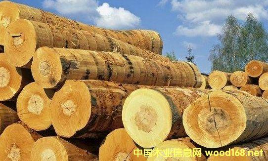 全球针叶材贸易量达到近10年来的最高水平