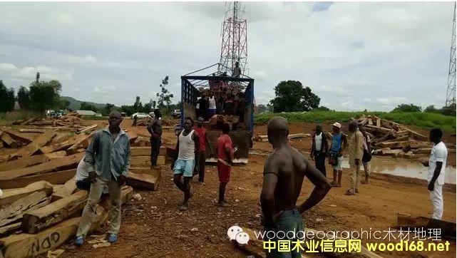 木材地理:中国与尼日利亚间的刺猬紫檀贸易