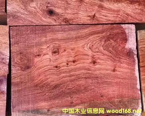 2016年木材市场最火的材种介绍--小巴花