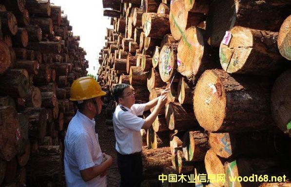 日照原木进口稳步增长
