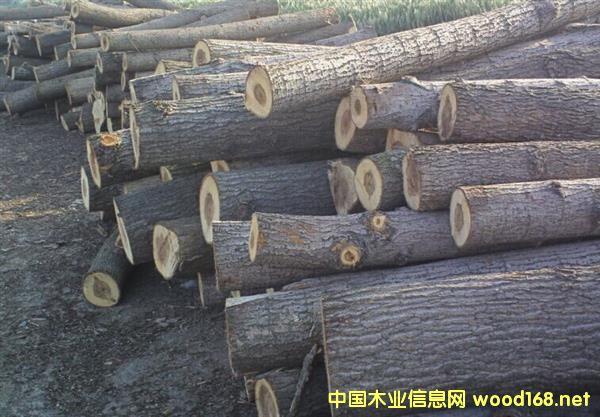俄罗斯杨木原木