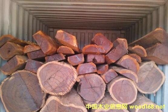 莫桑比克禁止原木出口