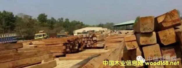 缅甸木材业停止木材砍伐生产期