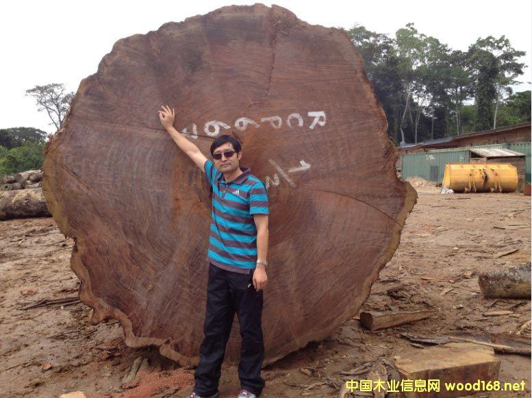 加蓬木业-千年精品巴花王