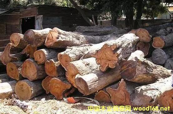 广东木材市场刺猬紫檀形势分析:库存量?价格?报关?