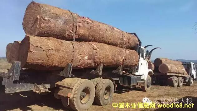 安哥拉木材出口又遇障碍
