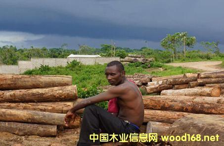 非洲木材成为新掘金点?
