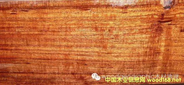 木材百科:可乐豆(Mopane)木材详解