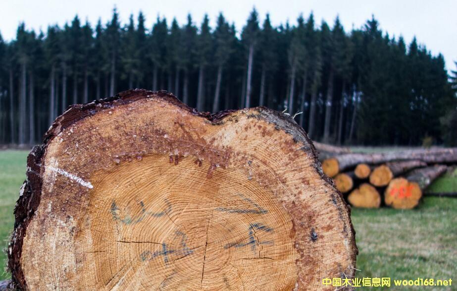 全球木材市场分析:价格上涨 下游行业加速洗牌