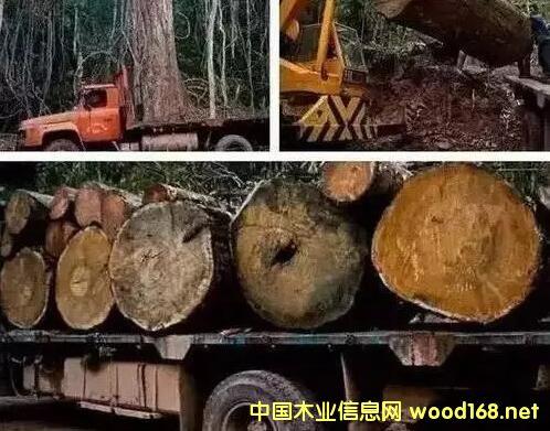 红木将无材可用:大红酸枝涨幅40%,缅甸花梨涨幅65%
